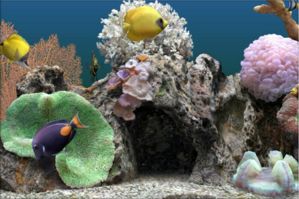 marine-aquarium-30-21
